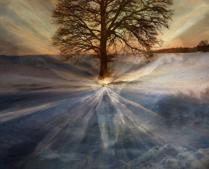 Tree by Truth by h-k-d @flickr